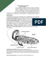 MITOCONDRIAS (1)