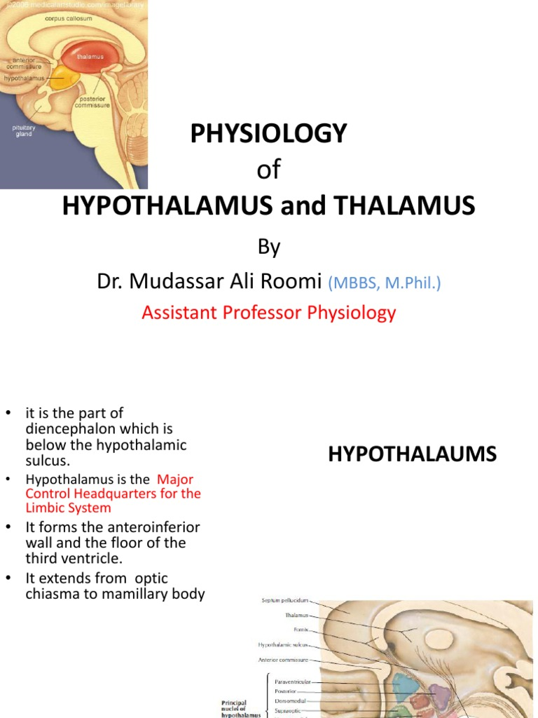 Lecture on the Physiology of Hypothalamus and Thalamus by Dr. Roomi ...