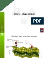 plasma membranes