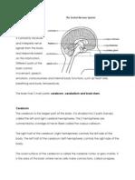 Anaphy Brain