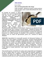 Quinoa - Cereala Care Bate Carnea