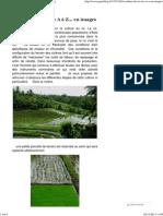 La culture du riz de A à Z... en images - Paperblog