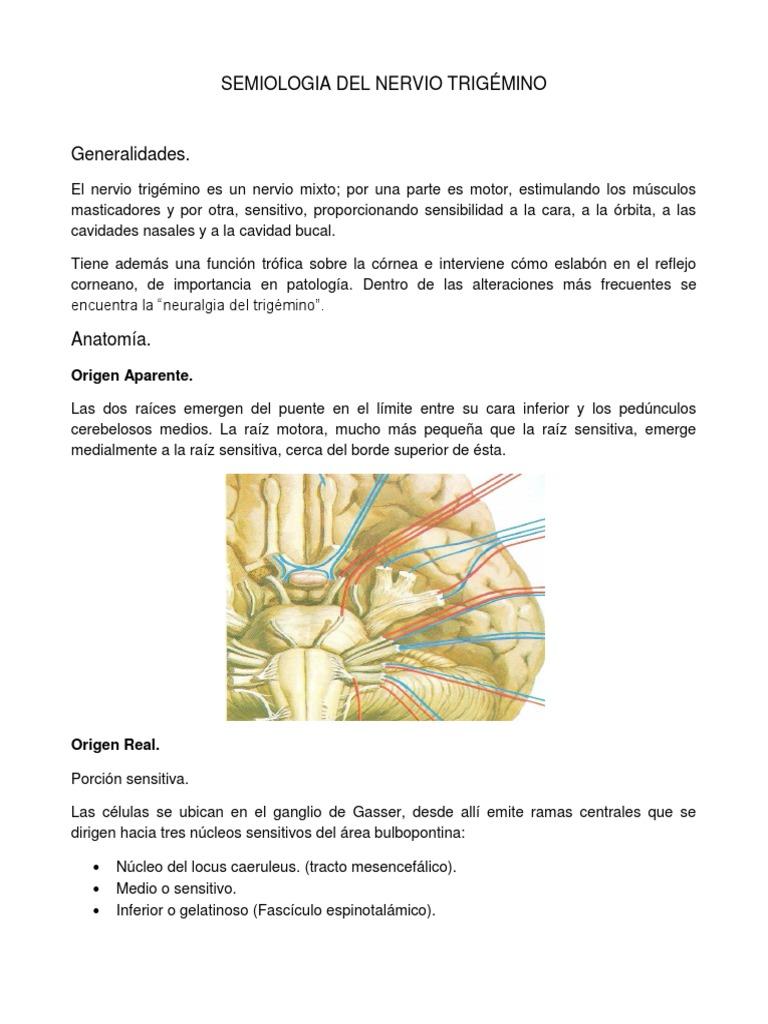 SEMIOLOGIA DEL NERVIO TRIGÉMINO