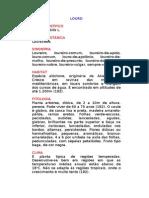 Louro - Laurus nobilis L. -  Ervas Medicinais – Ficha Completa Ilustrada