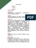 Sabugueiro - Sambucus nigra L. - Ervas Medicinais – Ficha Completa Ilustrada