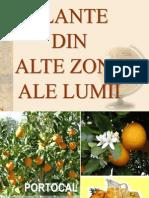 Plante Din Alte Zone Ale Lumii