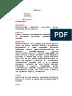 Tiririca - Cyperus rotundus L. - Ervas Medicinais – Ficha Completa Ilustrada