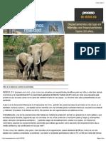 El Placer de Torturar a Un Elefante