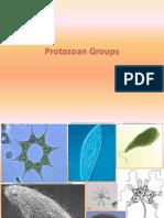 Protozoan Summer 2013