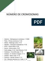 NÚMERO DE CROMOSOMAS