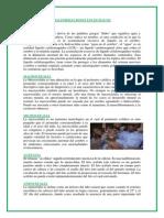 MALFORMACIONES ENCEFÁLICOS morfologia PAGINA 16