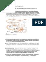 Las Neuronas, best creation
