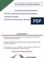Tema 14 - Acidos Nucleicos Farmacia
