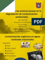 Lacasa para degradación de contaminantes