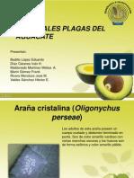 Plagas Del Aguacate