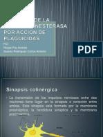 INHIBICIÓN DE LA ACETILCOLINESTERASA POR ACCIÓN DE PLAGUICIDAS