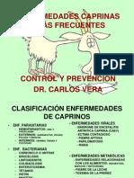 Enfermedades de Cabras Carlos