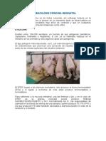 Colibacilosis Porcina Neonatal
