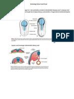 Embriologi Sistem Saraf Pusat