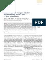 Efficient single-cell transgene induction in Caenorhabditis elegans using a pulsed infrared laser