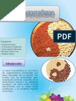 Dieta Macrobiotica Final