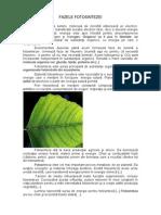 fazele fotosintezei