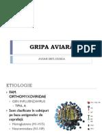 31810032-GRIPA-AVIARA