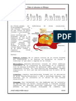 La Celula Animal