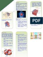 Triptico Aparato Cardiovascular