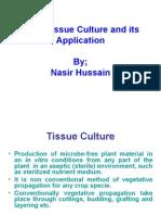 14654500 Tissue Culture