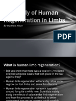 the study of human regeneration in limbs