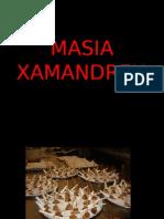MASIA XAMANDREU