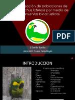 Preesentacion Bioacustica loro orejiamarillo