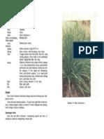 bawang daun.pdf