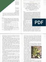 Dactylorhiza Paper