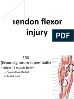 Tendon Flexor Injury ZED