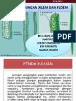 Struktur Penyusun Xilem Dan Floem