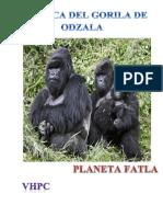 Reportaje Congo
