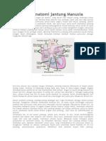 Mengenal Anatomi Jantung Manusia