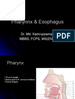 Pharynnx & Esophagus
