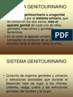 gGenitourinario