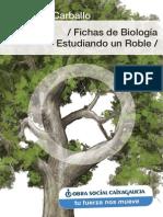 Fichas Biologia Roble