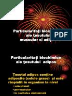 Particularitati Metabolice b