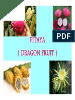 Pitaya Presentation