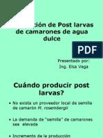 Producción de post larvas camarón I