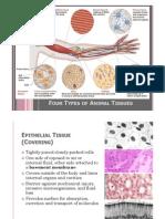 [BIO] 03 - Animal Tissues Crisologo
