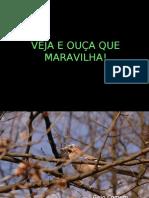 aves_(ajudando_a_natureza)