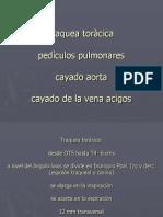 Pulmones Ppt Original 130326155010 Phpapp02