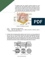 teori biofarmasetika