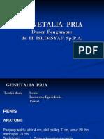PA Genital Pria